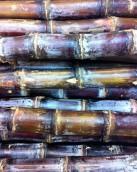 sugar_cane_by_kimberleyluu-d9tc5fl