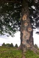 tree_amputee_by_kimberleyluu-d9tc6uz